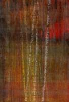 "Web Image of ""Fall Birch"""
